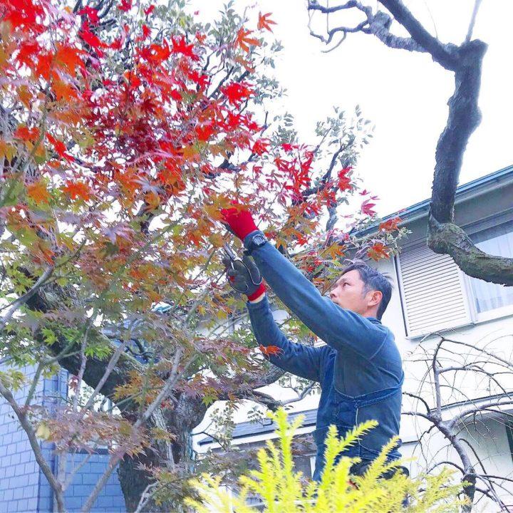 東京都でおすすめの植木屋